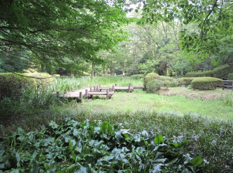 芹ヶ谷公園湿地