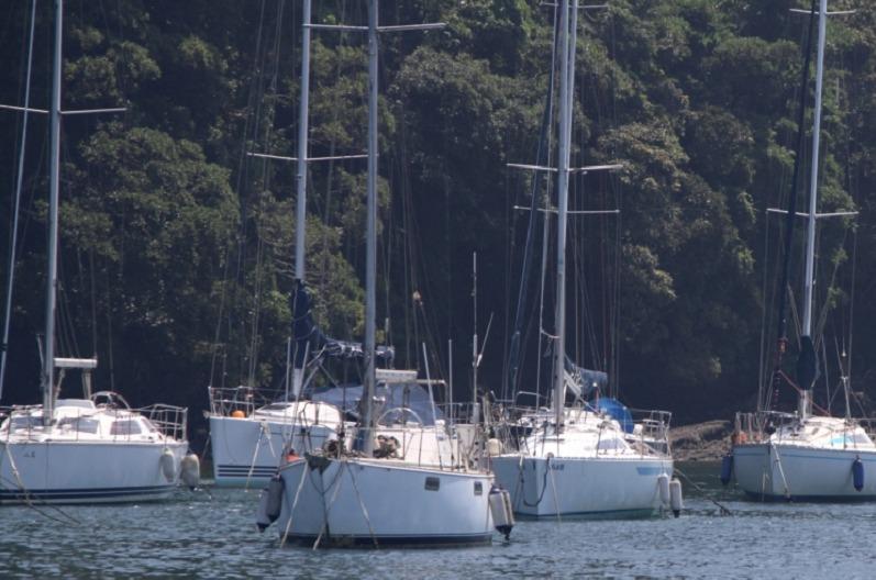 小網代湾ヨット