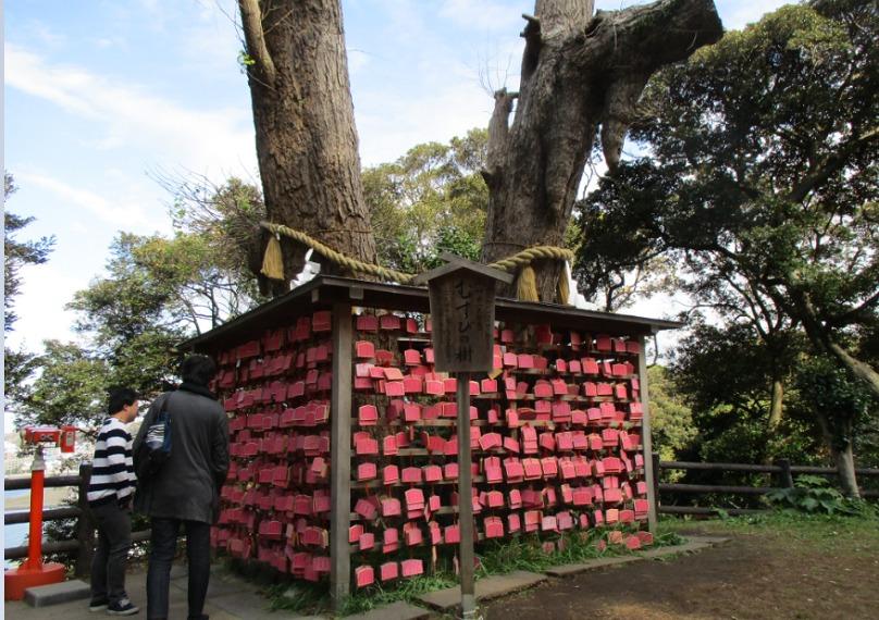 結びの樹風景