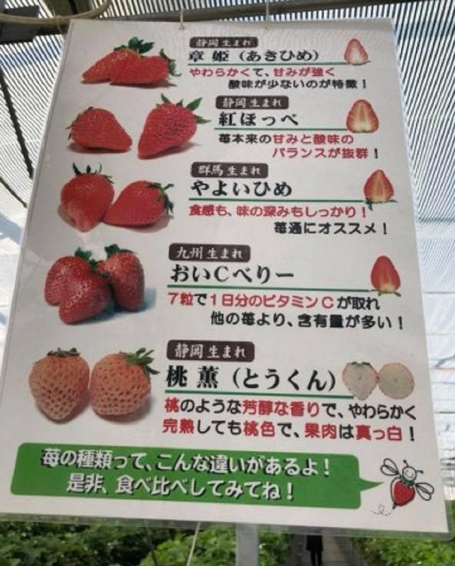 河本ファーム いちごの種類